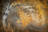 Spirit of Autumn Photographic Print by Ursula Abresch