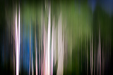Spring Birches Photographic Print by Ursula Abresch