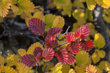 Fagus Photographic Print by Margaret Morgan