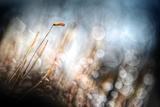 Garden Moss Photographic Print by Ursula Abresch