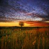 Thee Lone Tree Photographic Print by Adrian Campfield