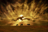 Wild Horses! Photographic Print by Adrian Campfield