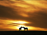 An Equine Kiss Photographic Print by Adrian Campfield