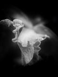 Lily 1 Fotodruck von Margaret Morgan