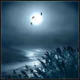 Luna Light Photographic Print by Adrian Campfield