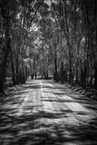 Dunalley Forest Lane Photographic Print by Margaret Morgan