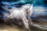 White Beauty Photographic Print by Ursula Abresch