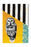 Barred Owl Giclee Print by  Urban Soule