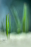 Spring Photographic Print by Ursula Abresch