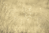 Golden Wispers Photographic Print by Adrian Campfield