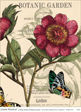 London Botanical Posters by Zachary Alexander