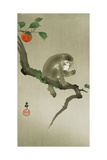 Monkey and Persimmon Giclee Print by Koson Ohara