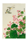 Two Birds and Begonia in Rain Giclee Print by Koson Ohara