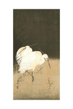 Two Egrets at Night Giclee Print by Koson Ohara