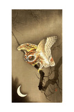 Owl and Crescent Moon Giclee Print by Koson Ohara