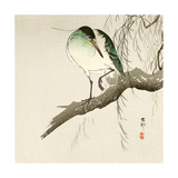Green Heron on Branch Giclee Print by Koson Ohara