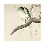 Green Heron on Branch Giclee Print by Koson Ohara