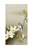 Blue Bird and Magnolia Giclee Print by Koson Ohara