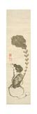 A Turnip Giclee Print by Jakuchu Ito