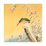 Martin-pêcheur Impression giclée par Koson Ohara