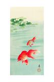 Two Goldfish Impression giclée par Koson Ohara