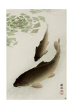 Two Carp and Blooming Water Plants Reproduction procédé giclée par Koson Ohara