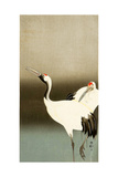 Two Cranes Giclee Print by Koson Ohara