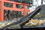 Torii Which Gazes at the Fallen Leaves of the Ginkgo Tree of the Roof of the Shrine in Kyoto Photographic Print by Ryuji Adachi