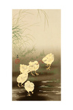 Baby Chicken and Worm!!!! Giclee Print by Koson Ohara