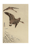 Geese in Snow Falling Sky Giclee Print by Koson Ohara