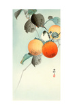 Nuthatcher Atop Persimmon Giclee Print by Koson Ohara