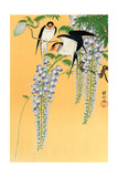 Swallows and Wisteria Reproduction procédé giclée par Koson Ohara