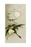 Geese and the Moon Giclee Print by Koson Ohara