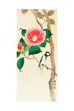 Bird on Camellia Giclée-Druck von Koson Ohara