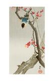 Blue Bird on a Plum Tree Reproduction procédé giclée par Koson Ohara