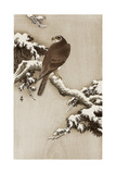 Goshawk on a Snow Covered Pine Branch Reproduction procédé giclée par Koson Ohara