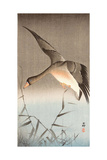 Wild Goose Giclee Print by Koson Ohara