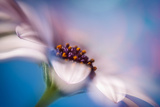 The Daisy Experiment Photographic Print by Ursula Abresch