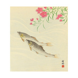 Trouts and Wild Pink Giclee Print by Koson Ohara