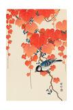 Bird and Red Ivy Giclée-tryk af Koson Ohara