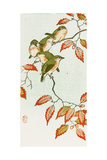 Five Small Birds Perch on a Acorn Tree Giclee Print by Koson Ohara