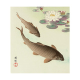 Two Carp and Water Lily Pad Giclee Print by Koson Ohara