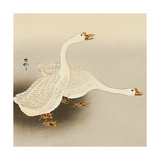 Two White Geese Giclee Print by Koson Ohara