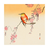 Red Bird and Cherry Blossoms Giclee Print by Koson Ohara