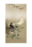 Pigeons under Cherry Tree Giclee Print by Koson Ohara