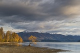 Wanaka Autumn Photographic Print by Yan Zhang