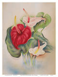 Red and White Anthuriums Hawaii Poster by Tip Freeman