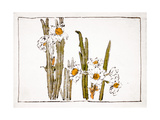 Daffodils a Comparison of Flowers Giclee Print by Zeshin Shibata