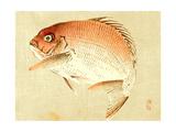 Bairei Gadan - Red Snapper Giclee Print by Bairei Kono