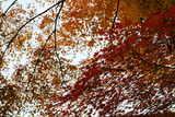 The Autumnal Leaves of Kyoto Photographic Print by Ryuji Adachi